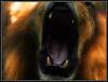 (Caro Rolando) Tags: animales animalescazadores felinos leon leones boca colmillos dientes gato bostezo rugido mamiferos pelo zoologico riodejaneiro zoorio zooderiodejaneiro brasil