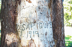 Signature and 1919 date created with shell casings at Sheep Camp. (Ken Zaremba) Tags: cascademountains geography goatrockswilderness northamerica outdooractivities outdoorsports snoqualmienationalforest unitedstates washington washingtonstate backpacking camping hiking yakima geo:lon=12137995719444 geo:lat=46495526611112 geo:country=unitedstates geo:state=washington geo:location=unnamedroad geo:city=yakima