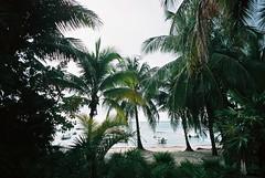 Akumal (cranjam) Tags: lomo lca lomography film slide xpro expired kodak elitechrome100 mexico messico yucatán quintanario beach spiaggia caribbeansea marcaraibico palme palmtrees sea mare akumal akumalbeach