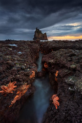 Starfish Alley (Dylan Toh) Tags: nisifilters seastack aotearoa beach dawn dylantoh everlooklandscapephotography motukiekie newzealand punakaiki seascape starfish sunrise sunset