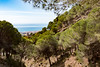Sierra Mijas (Keith in Exeter) Tags: sierra mijas mountain range spain pine tree forest landscape sea mediterranean coast sky