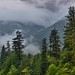 Mountainside and Ridge Hidden in the Clouds (North Cascade National Park Complex)