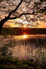 Sunset (pedro4d) Tags: sony rx100 m5 mk5 polska poland polen landscape landschaft krajobraz sunset zachód słońca nature chojno
