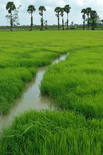 Ranot Fields