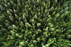 Rising greens - CA (Ian P. Miller Photography) Tags: color landscape green trees phantom dji california santacruz aerial
