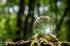 The lost orb of vision ! (Mike Y. Gyver ( Back Home )) Tags: orb sphere glass ball bokeh woods macro closeup forest moss refraction glassball mood nikon nikonafsdxnikkor18105mm3556g d90 dof dephtoffield mygphotographiewixsitecommyg2017 myg 2018 flare starburst