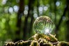 The lost orb of vision ! (Mike Y. Gyver ( OFF a few days !!! )) Tags: orb sphere glass ball bokeh woods macro closeup forest moss refraction glassball mood nikon nikonafsdxnikkor18105mm3556g d90 dof dephtoffield mygphotographiewixsitecommyg2017 myg 2018 flare starburst