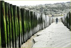 La plage, les dunes et la mer du Nord à Dombourg, Walcheren, Zeelande, Nederland (claude lina) Tags: claudelina nederland paysbas hollande zeeland zélande dombourg plage beach mer sea merdunord noordzee dunes poteaux