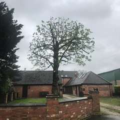 "Horrible wet day  but nice work. We reduced this old horse chestnut pollard and tried to regain some balance and structure back to it where we could. Pleased with the outcome ! #wardenstreecare <a style=""margin-left:10px; font-size:0.8em;"" href=""http://www.flickr.com/photos/137723818@N08/41696966102/"" target=""_blank"">@flickr</a>"