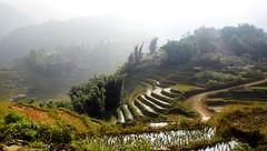 Cultivos en terrazas - Terrace crops (Raúl Alejandro Rodríguez) Tags: cultivos crops farming terrazas terraces en montañas mountains niebla fog nubes clouds árboles trees sapa vietnam