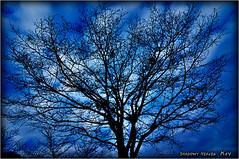 Lace...I (SHADOWY HEAVEN Aya) Tags: 14112970s0028 tokyocameraclub igers igersjp phosjapan picsjp 日本 北海道 ファインダー越しの私の世界 写真好きな人と繋がりたい 写真撮ってる人と繋がりたい 写真の奏でる私の世界 空 木 樹 coregraphy japan hokkaido outdoor landscape paysage sky tree trees blue air baum arbre