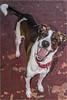 Delta (Lucio_Vecchio) Tags: nikon d5500 argentina retrato animal perro mascota canino