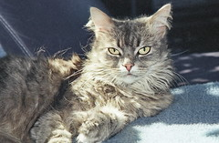 img055 (d_fust) Tags: cat katze fust tier haustier kätzchen skorpi animal кот gato katt 貓 kissa γάτα 猫 kedi macska แมว gatto बिल्ली gatito γατάκι yavrusu 小貓 kitten का बच्चा anak kucing gattino 仔猫 고양이
