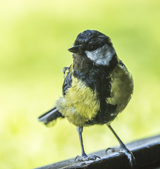 Coal Tit (Mal.Durbin Photography) Tags: forestfarm maldurbin wildlifephotography wildlife birds