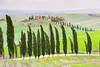 Cypresses in the wind (SLpixeLS) Tags: italy italie tuscany toscane toscana landscape paysage tree arbre cypress cyprès farm ferme wind vent platinumheartaward