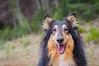 18/52 Leia & happy girl (shila009) Tags: leia perro dog happy smile portrait rainyday roughcollie 1852 forest green 52weeksfordogs