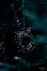 Traces (Estefania Almarte) Tags: dew morningdew spidersweb web traces water gota drop blue azul duotone