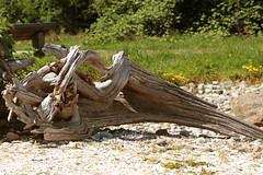driftwood (annapolis_rose) Tags: driftwood moa museumofanthropology ubc campus