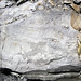 Sandstone (Middle Pennsylvanian; Frazeysburg Pit, Muskingum County, Ohio, USA) 17