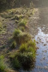 180520_017 (123_456) Tags: parkdehogeveluwe hoge veluwe nederland gelderland otterlo hoenderloo schaarsbergen