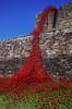 poppies - weeping window (lowooley.) Tags: carlisle northwestengland cumbria castle poppies artinstallation paulcummins tompiper