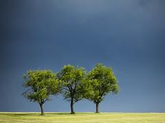 L1000560_CL_55-135TL_052018_Gewitterbäume (peterjh2010) Tags: nature tree baum leica natur green light