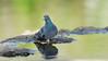 Pigeon & Reflections (Franck Zumella) Tags: pigeon green vert bird oiseau animal nature reflection reflexion water eau lac lake tree arbre sony a7s tamron 150600