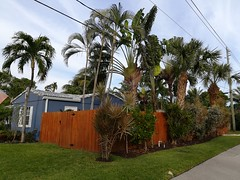 The yards in the area were filled with so many types of palm trees