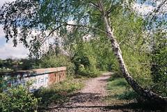Royate Hill viaduct Nature Reserve (knautia) Tags: royatehillnaturereserve greenbank bristol england uk april 2018 film ishootfilm olympus xa2 nxa2roll6 fuji superia 400iso olympusxa2 naturereserve viaduct tree silverbirch