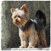 - Wachhund - (HORB-52) Tags: berndsontheimer badenwürttemberg horbamneckar hund