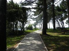 Paseando por el paseo de Coroso-Rbeira (2) (Los colores del Barbanza) Tags: paseo coroso pino ribeira barbanza coruña galicia españa