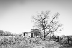Topaz, Califfornia (paccode) Tags: solemn d850 landscape bushes brush blackwhite quiet california urban monochrome farm forgotten creepy abandoned scary serious fence coleville unitedstates us