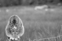 Observation post (Zèè) Tags: chat cat black blanc bw blackandwhite noir noirblanc nature white monochrome