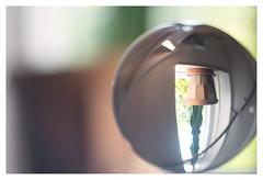 Succulent in the windowsill (leo.roos) Tags: lensball crystalball roussel12735 a7 rousselparisanastigmatprojectiontraiteseriepf127mmf35 projectorlens projectionlens day127 dayprime dayprime2018 dyxum challenge prime primes lens lenzen brandpuntsafstand focallength fl darosa leoroos nox