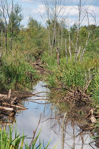 Волинське болото InterNetri Ukraine 20