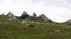Vers les étangs de Rabassoles (Yvan LEMEUR) Tags: ariège montagne moutons brebis france pyrénées troupeau axlesthermes etangsderabassoles mountain extérieur paysage pastoralisme randonnée randonnéepyrénéenne