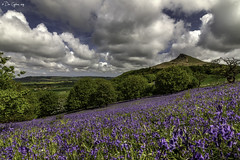 Pilgrimage. (Dave Cappleman) Tags: bluebells newtonwoods roseberrytopping