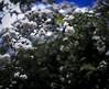 Rosedales (Alvaro.sh) Tags: canon canont5 canon1200d 1200d t5 sigma sigma30 sigma30mm 30mmsigma 30mm 30mmf14dc|a madrid españa vacaciones viaje flower flora flores flowers