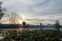 "Laguna Humedal ""El Loto"" (Joaco_A) Tags: humedal laguna llanquihue humedalelloto cielo atardecer sunset nubes sky arboles ciudad parque"