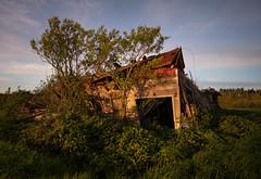 Broken Barn (Michael Berg Photo) Tags: michaelberg michaelbergphoto fuji fujifilm fujinon xpro2 14mmf28 14mm washington silvana rural barn abandoned