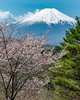 2018 Spring Fuji (shinichiro*) Tags: 忍野村 山梨県 日本 jp 20180413ds53196 2018 crazyshin nikond4s afsnikkor2470mmf28ged fuji japan spring april oshino yamanashi 二十曲峠 sakura cherryblossoms 27998595018 candidate