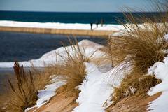 Dune Grass in Winter (mobius2016) Tags: mackinaw island city winter frozen ice bridge sleeping bear dunes michigan