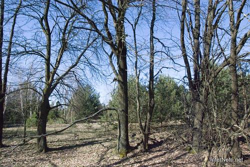 Волинський ліс InterNetri Ukraine 0339758004