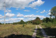 Волинський ліс Лісова дорога InterNetri Ukraine 1142968443