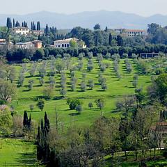 Campagna Senese (pom'.) Tags: siena campagnasenese ulivi olivetree green toscana tuscany italy italia europeanunion april 2018 100 cypress cipressi panasonicdmctz101 200 300