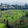 Campagna Senese (pom.angers) Tags: siena campagnasenese ulivi olivetree green toscana tuscany italy italia europeanunion april 2018 100 cypress cipressi panasonicdmctz101 200