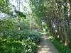 The path (Michiel Thomas) Tags: path footpath cyclepath bicycle fietspad fluitenkruid anthriscus sylvestris fluitekruid paardenbloem taraxacum officinale paardebloem may mei mai voorjaar spring printemps roadside