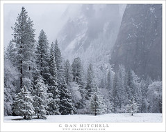 Forest, Granite, And Spring Snow (G Dan Mitchell) Tags: sentinel rocks elcapitan meadow forest trees flurries snow snowfall storm gentle yosemite national park valley sierra nevada spring california usa north america