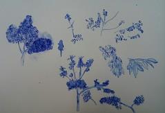 Experimente mit Bäumen und Laub (raumoberbayern) Tags: laub leafes drawing zeichnung robbbilder sketchbook skizzenbuch tree baum fineliner water finger pinsel nature italia toskana blue blau bleu