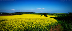 Now I dream of summer.. (Ollie_57.. Slowly catching up) Tags: landscape fields tree sky view scenery nature hills clouds spring may 2018 artistic oliort vignetting phantom4pro djifc6310 crops mamhead devon westcountry england uk affinityphoto ollie57